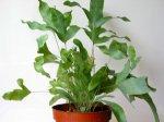 Zimmerpflanze bestimmen - Zimmerpflanze sonnig ...